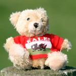 Plüschkumpeltours für Teddybär & Co