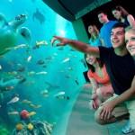 Unterwasserwelt aus Sicht einer Schildkröte