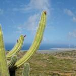 Karibikinsel Aruba setzt auf fossile Brennstoffe