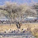 Naturerlebnisse in Khor Kalba an der Ostküste Sharjahs