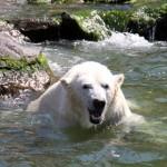 Erlebnis-Zoo Hannover zeigt: So geht Zoo heute