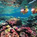 Paarungszeit am Great Barrier Reef