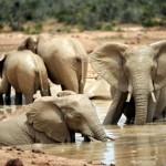 Auf Safari durch die Kinderstube Südafrikas