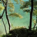 Urtümliche Riesen: Buchenwälder auf Rügen nun Weltnaturerbe