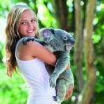 Den Knuddelbären ganz nahe: Auf Tuchfühlung mit Koalas