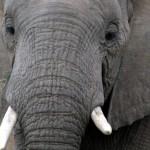 Auf Tuchfühlung mit der Wildnis – In Botswana werden Safari-Träume wahr