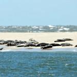 Auge in (Knopf-) Auge: Unterwegs mit dem Seehundjäger