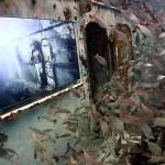 Kunst unterm Meeresspiegel – versenktes Schiff als Ausstellungsort