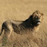 Safari in Südafrika: Die Wildnis immer anders entdecken
