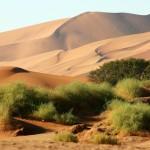 Wüstenwunder in Namibia: UNESCO erklärt Namib-Dünenmeer zum Weltnaturerbe