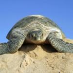 Sultanat Oman bietet Safari-Erlebnisse in Wüste, Gebirge und am Meer