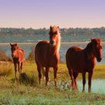 Von Mustangs bis zu Meeresschildkröten: Tierische Vielfalt in North Carolina