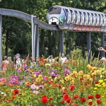 Dahlienpracht begeistert die Gartenschau-Besucher in Hamburg