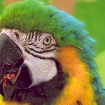 Von Papagei bis Glasauge – was Passagiere alles im Flugzeug vergessen