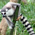 Die Arche der Natur:  Die einmalige Tier- und Pflanzenwelt auf Madagaskar