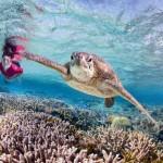 Schildkröten-Pflege auf Fitzroy Island