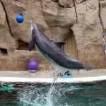Tanzende Flipper im Duisburger Delfinarium