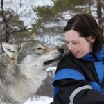 Die mit den Wölfen heulen: Nordnorwegischer Polar Park holt Weltrekord