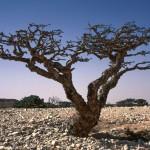 Omans alte Geschichte neu entdecken