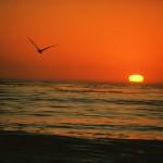 Bunga-Bunga-Beach zum Schnäppchenpreis
