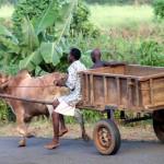 Madagaskars Norden entdecken: Vanille, Lemuren und Legenden