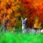 Kastanien, Kaninchen und Kaminfeuer: Wildsaison in der Achterhoek
