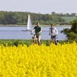 Auf den Spuren der Wikinger: Maritimes Urlaubsvergnügen am Ostseefjord Schlei