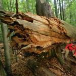 Deutschlands einziger Urwald: Spannende Expeditionen im Nationalpark Bayerischer Wald