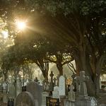 Dublins berühmte Grabstätte, der Glasnevin Cemetery: Blühendes Leben in Irlands Nekropole