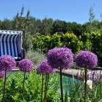 Kreuzfahrt durch ein Blumenmeer – Landesgartenschau lockt nach Papenburg