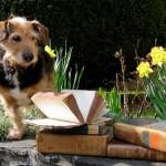 Bücherfest Redu: Osterspaziergang für Bibliophile