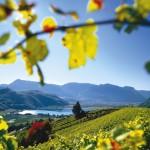 Nachhaltiger Genuss in Südtirols Süden: Ein Tag autofreie Weinstraße beim Wine & Bike Day