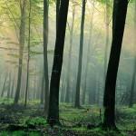 Åmosen nahe Kopenhagen als erster Naturpark mit dänischem Qualitätssiegel ausgezeichnet