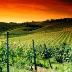 50. Welterbestätte in Italien: Die Weinregion Langhe-Roero und Monferrato im Piemont