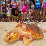"""""""Tour de Turtles"""" auf den Florida Keys – Wettlauf der Meeresschildkröten"""