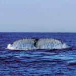 """Auch das ist Südafrika: Die """"Big Five"""" der Meere"""