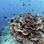 Zwischen Riffhaien und Geweihkorallen: Malaysias faszinierende Unterwasserwelt