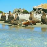 Faszinierende Naturschauspiele in Westaustralien