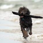 Leinen los am Hundestrand von Zandvoort