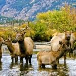 Himmlische Wildnis – der Rocky Mountain Nationalpark in Colorado wird 100 Jahre alt