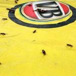 Amüsantes Kakerlaken-Rennen steigt in Brisbane