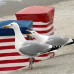Erster barrierefreier Strandkorb Deutschlands