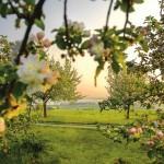 Bei Anruf: Blüten-Info für den Thurgau