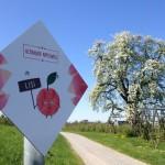 Neuer Apfelweg führt durch das Apfeldorf Altnau