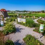 Bodensee – wo ein Kraut gegen fast alles wächst
