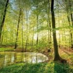 Kostenfreie App zum Weltnaturerbe Buchenwälder
