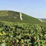 Weingärten der Champagne nun Weltkulturerbe