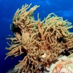 Baa Atoll – ein weltweit einzigartiges Ökosystem