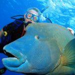 Unterwegs im größten Aquarium der Welt