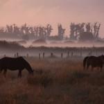 UNESCO-Titel für Geopark in der Eifel und im Teutoburger Wald